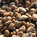 Pebbles on Chessel Beach